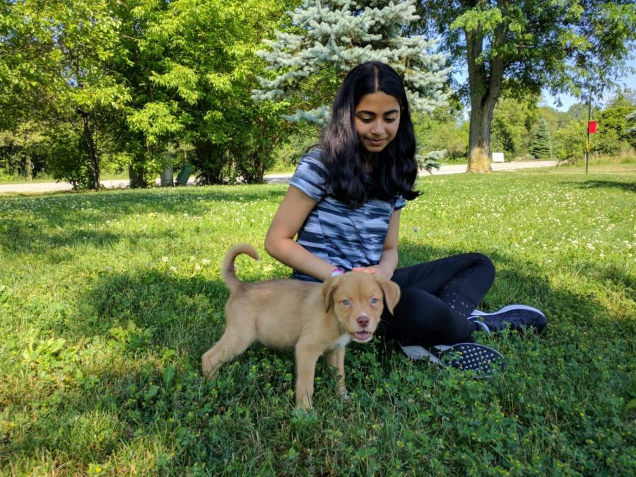 Freshman Varshini Kashyap plays with her puppy, Jasper.